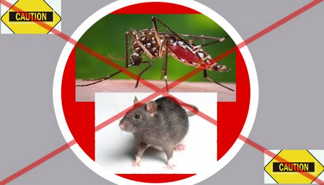 an essay on dengue virus Dengue fever definition dengue fever is a disease caused by one of a number  of viruses that are carried by mosquitoes these mosquitoes then transmit the.