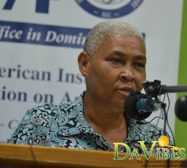 dncw praises iica for its continued assistance dominica vibes news