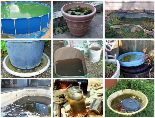 Mosquito Breeding sources.