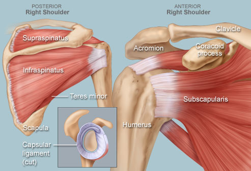shoulder-joint2